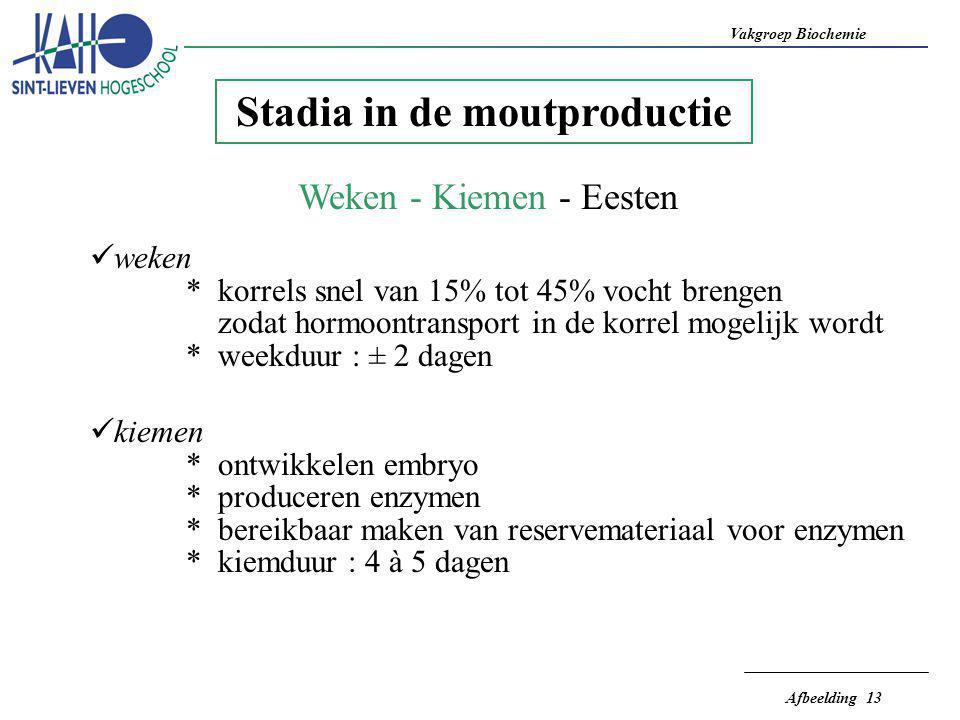 Vakgroep Biochemie Afbeelding 13 Stadia in de moutproductie Weken - Kiemen - Eesten  weken * korrels snel van 15% tot 45% vocht brengen zodat hormoon