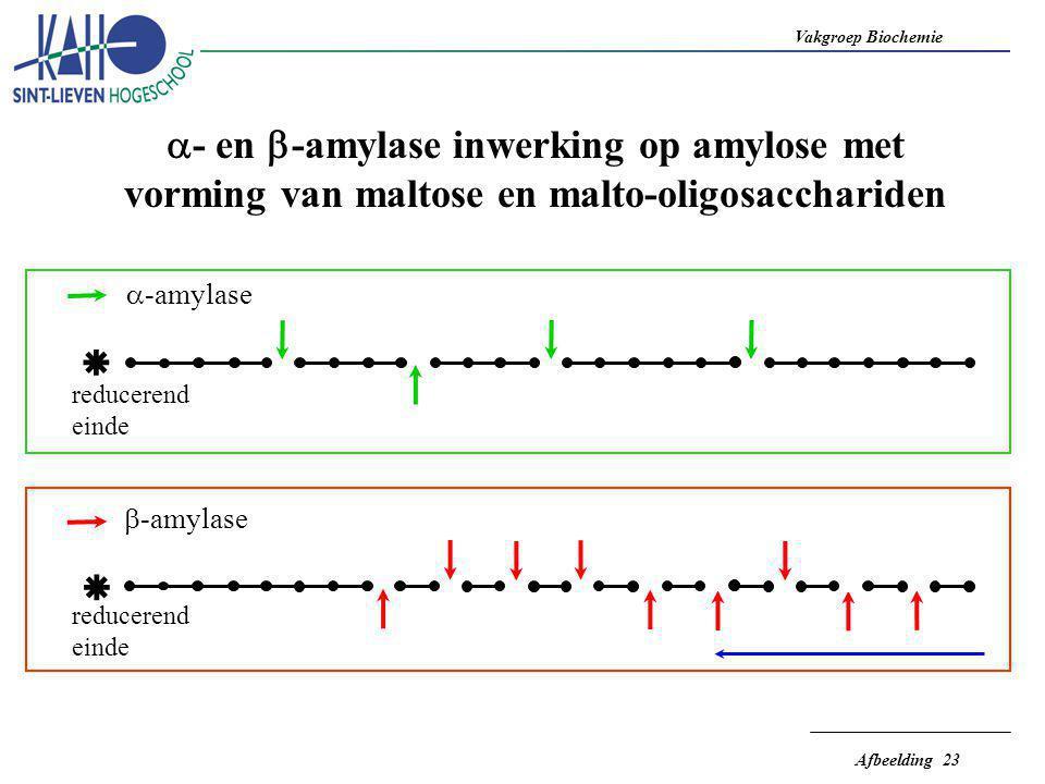 Vakgroep Biochemie Afbeelding 23    - en  -amylase inwerking op amylose met vorming van maltose en malto-oligosacchariden  -amylase  -amylase re