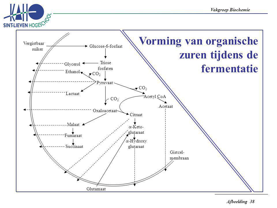Vakgroep Biochemie Afbeelding 38 Oxaloacetaat Pyruvaat Triose fosfaten Glucose-6-fosfaat Vergistbaar suiker Glycerol Ethanol Lactaat CO 2 Malaat Fumar