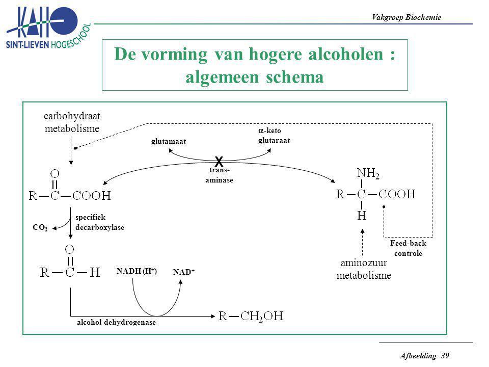 Vakgroep Biochemie Afbeelding 39 carbohydraat metabolisme CO 2 specifiek decarboxylase alcohol dehydrogenase NAD + NADH (H + ) X glutamaat  -keto glu