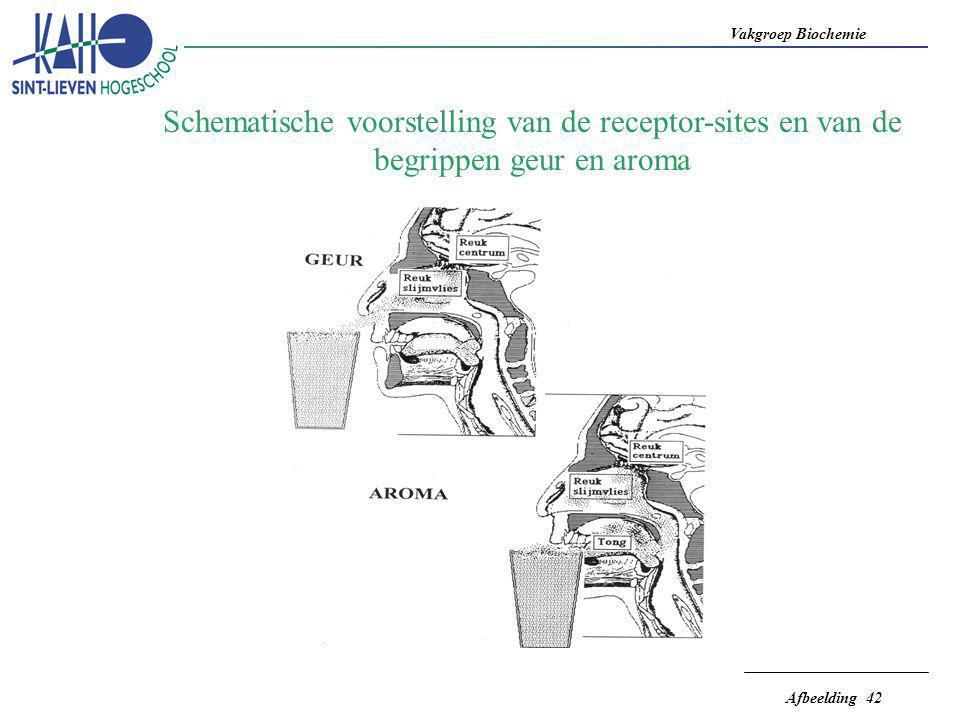Vakgroep Biochemie Afbeelding 42 Schematische voorstelling van de receptor-sites en van de begrippen geur en aroma