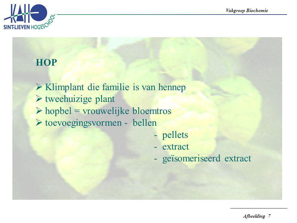 Vakgroep Biochemie Afbeelding 7 HOP  Klimplant die familie is van hennep  tweehuizige plant  hopbel = vrouwelijke bloemtros  toevoegingsvormen- be