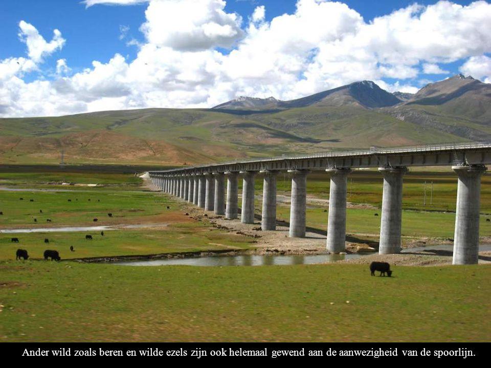 Ander wild zoals beren en wilde ezels zijn ook helemaal gewend aan de aanwezigheid van de spoorlijn.