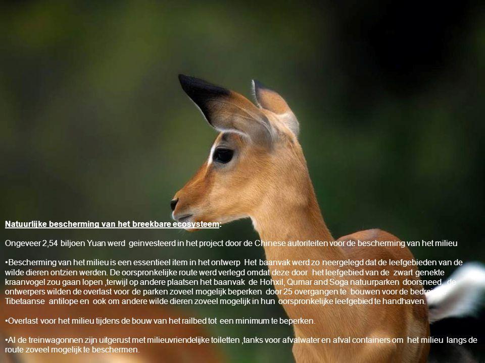 Natuurlijke bescherming van het breekbare ecosysteem: Ongeveer 2,54 biljoen Yuan werd geinvesteerd in het project door de Chinese autoriteiten voor de bescherming van het milieu •Bescherming van het milieu is een essentieel item in het ontwerp Het baanvak werd zo neergelegd dat de leefgebieden van de wilde dieren ontzien werden.