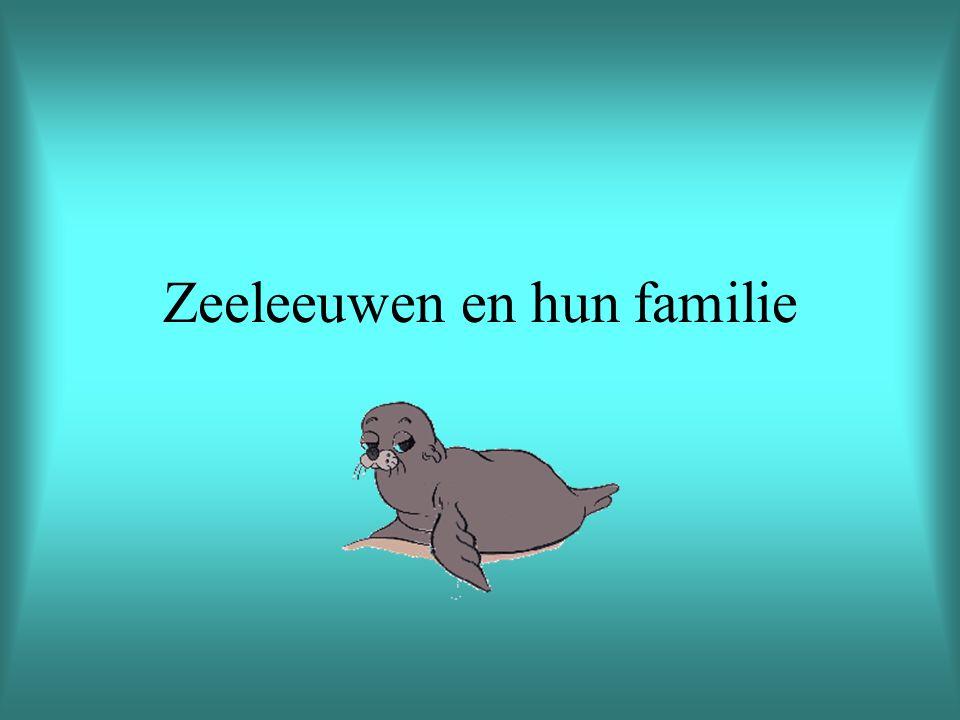 Zeeleeuwen en hun familie