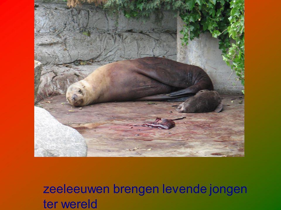 zeeleeuwen brengen levende jongen ter wereld