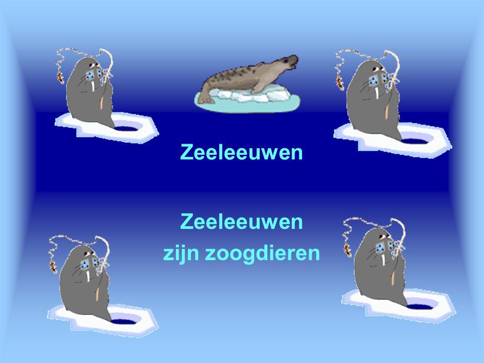 Zeeleeuwen zijn zoogdieren