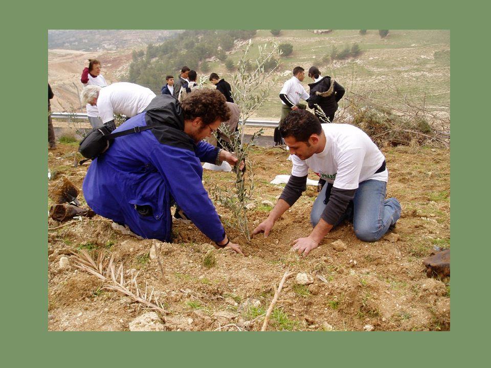 Inmiddels is de olijfboomactie uitgegroeid tot een internationale campagne.