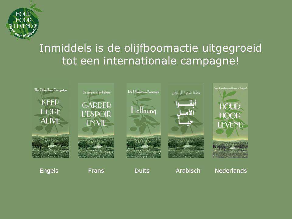 Ga naar www.plant-een-olijfboom.nl en sponsor een boom, of vul het strookje in de brochure in.