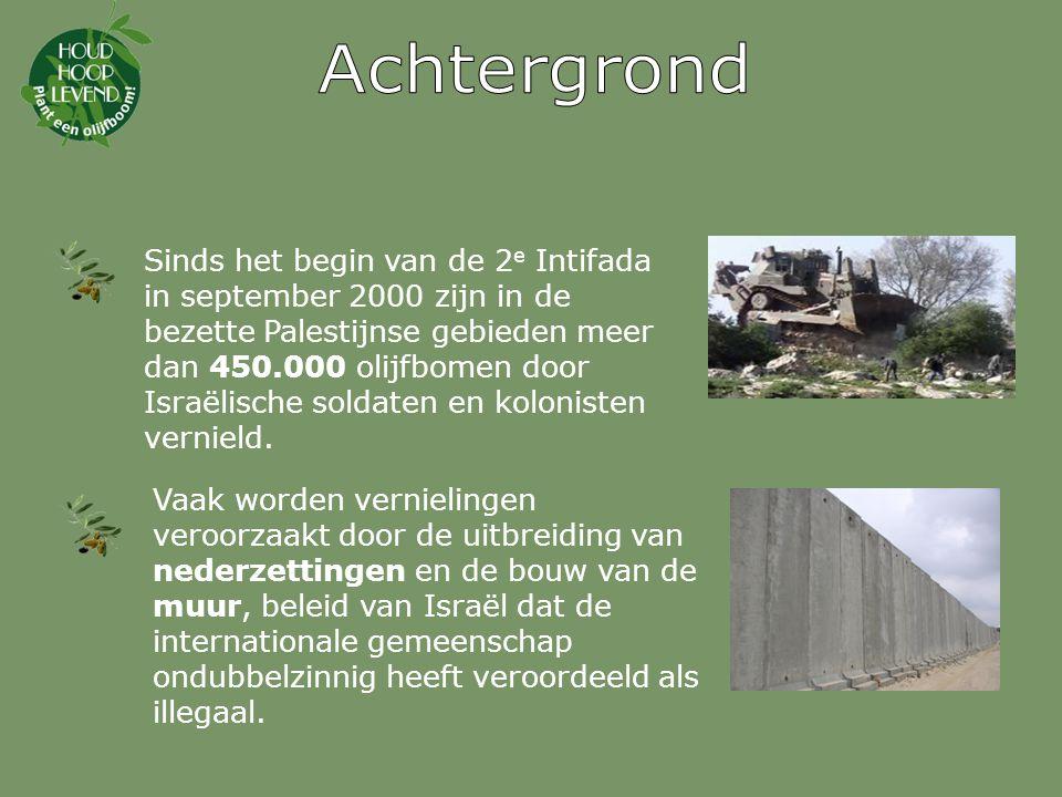 Sinds het begin van de 2 e Intifada in september 2000 zijn in de bezette Palestijnse gebieden meer dan 450.000 olijfbomen door Israëlische soldaten en kolonisten vernield.