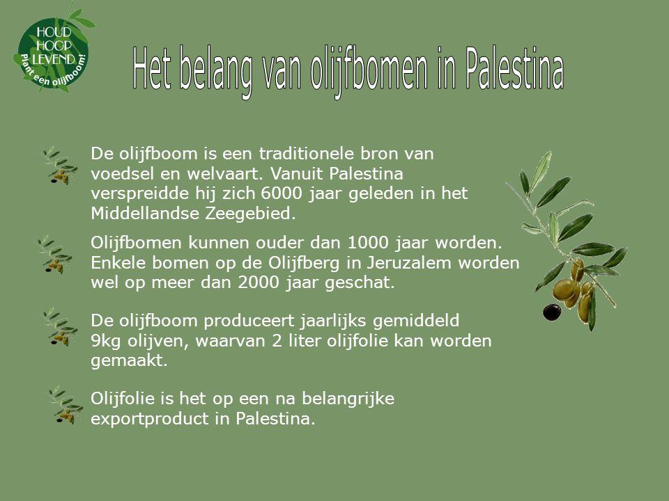 De olijfboom is een traditionele bron van voedsel en welvaart.