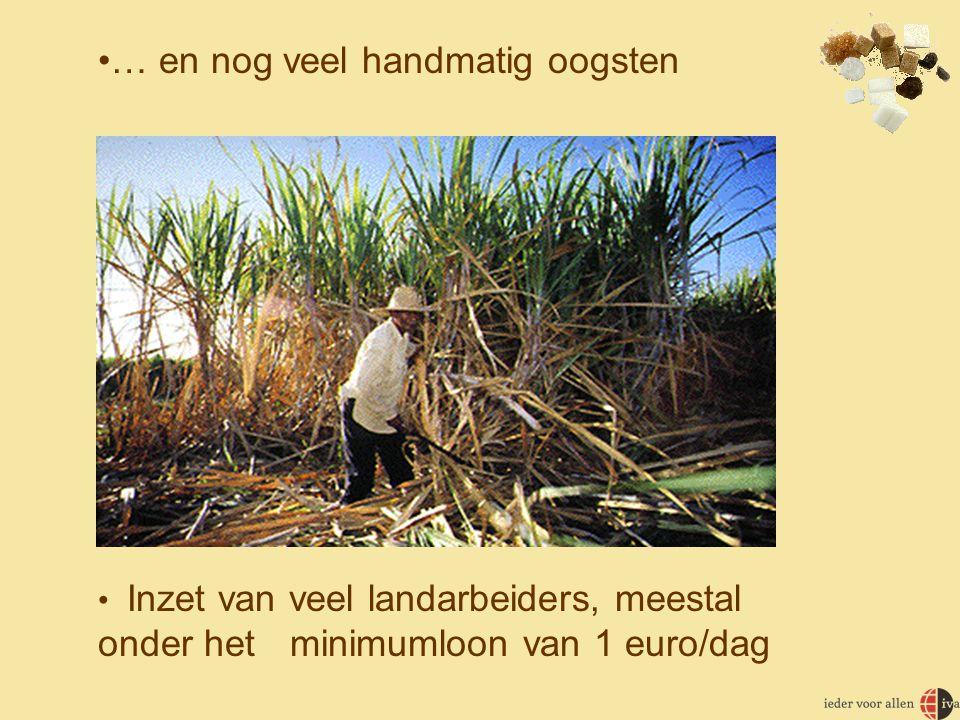•… en nog veel handmatig oogsten • Inzet van veel landarbeiders, meestal onder het minimumloon van 1 euro/dag