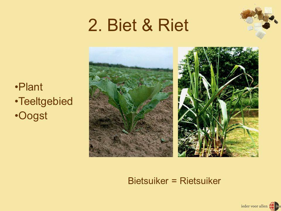2. Biet & Riet •Plant •Teeltgebied •Oogst Bietsuiker = Rietsuiker