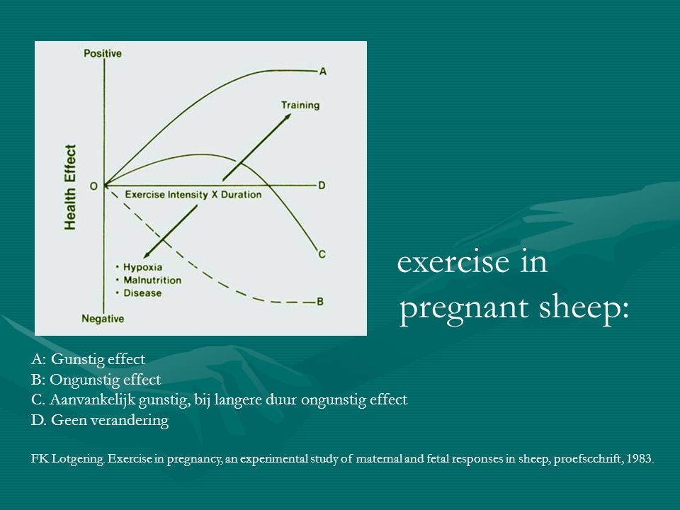 exercise in pregnant sheep: A: Gunstig effect B: Ongunstig effect C.