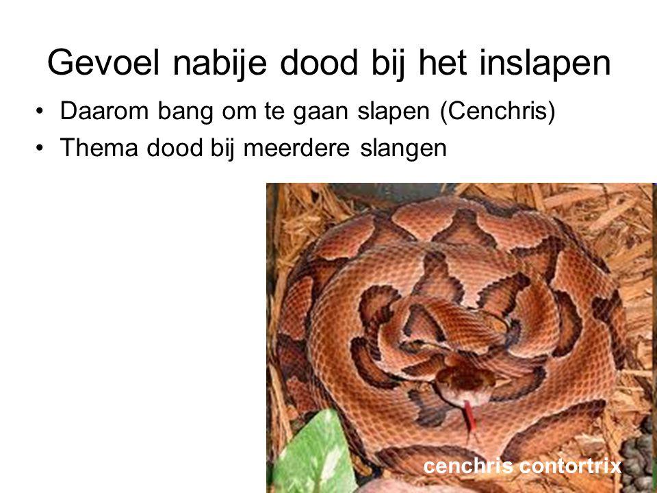 Gevoel nabije dood bij het inslapen •Daarom bang om te gaan slapen (Cenchris) •Thema dood bij meerdere slangen cenchris contortrix