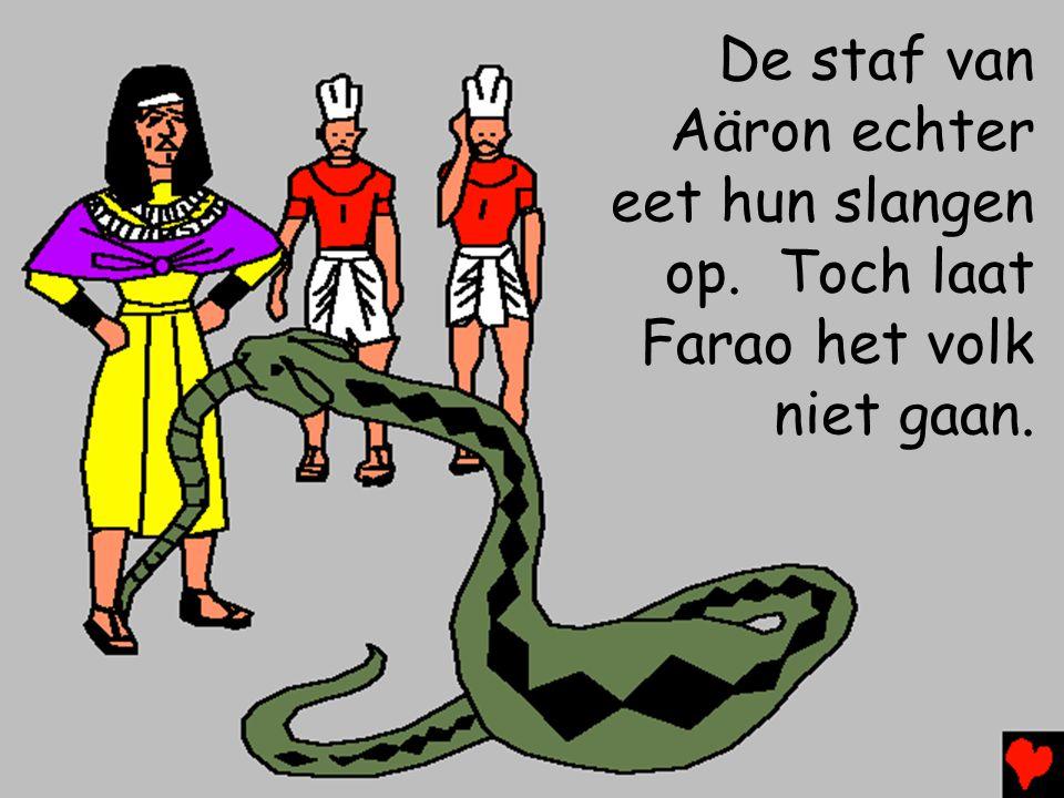 De staf van Aäron echter eet hun slangen op. Toch laat Farao het volk niet gaan.