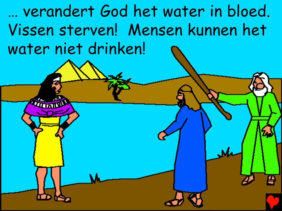 … verandert God het water in bloed. Vissen sterven! Mensen kunnen het water niet drinken!