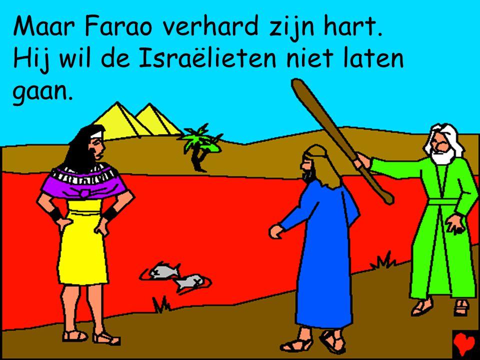 Maar Farao verhard zijn hart. Hij wil de Israëlieten niet laten gaan.