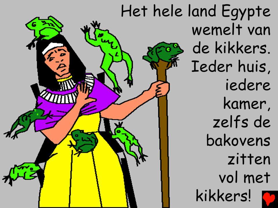 Het hele land Egypte wemelt van de kikkers.