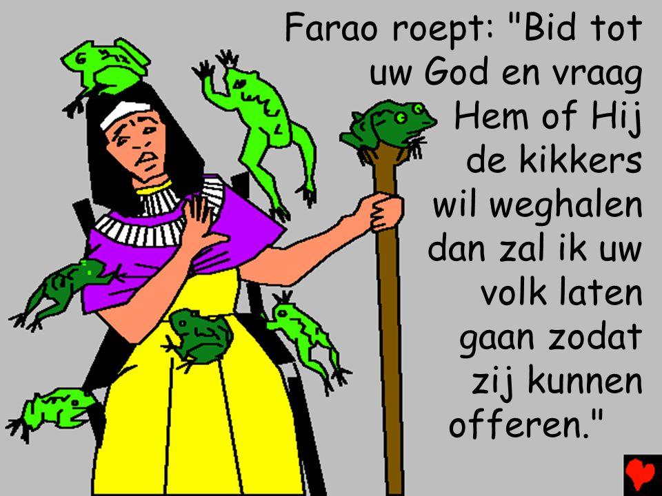 Farao roept: Bid tot uw God en vraag Hem of Hij de kikkers wil weghalen dan zal ik uw volk laten gaan zodat zij kunnen offeren.