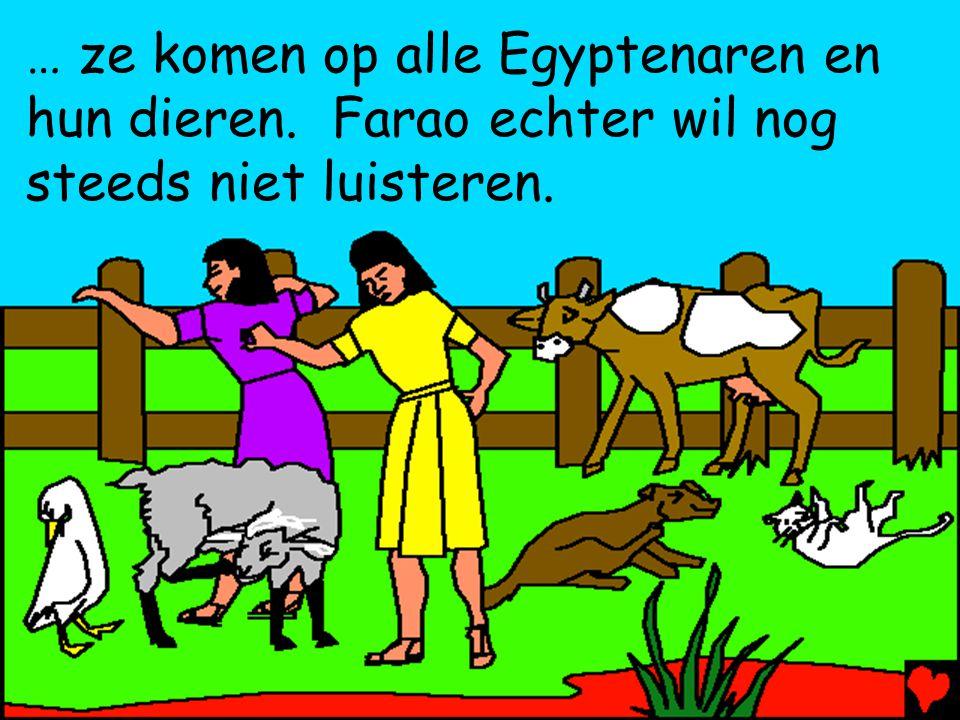 … ze komen op alle Egyptenaren en hun dieren. Farao echter wil nog steeds niet luisteren.
