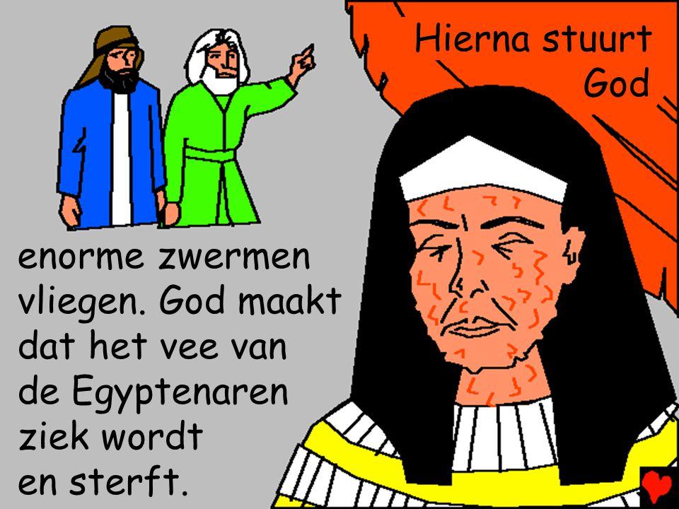 Hierna stuurt God enorme zwermen vliegen. God maakt dat het vee van de Egyptenaren ziek wordt en sterft.