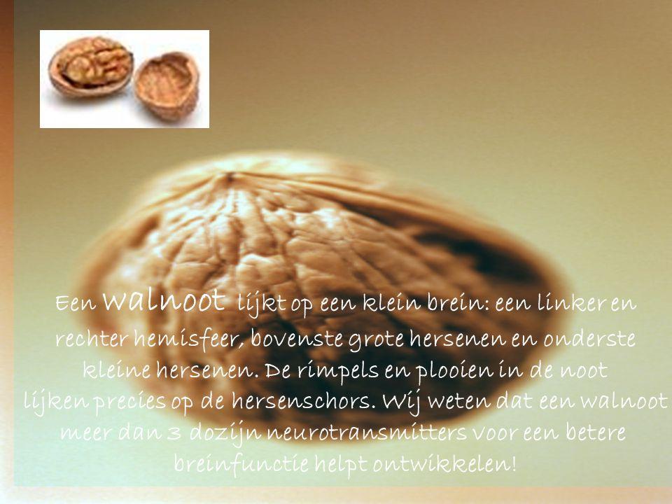 Een walnoot lijkt op een klein brein: een linker en rechter hemisfeer, bovenste grote hersenen en onderste kleine hersenen.