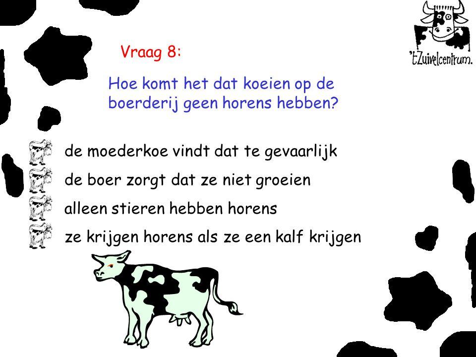 Vraag 8: Hoe komt het dat koeien op de boerderij geen horens hebben? de moederkoe vindt dat te gevaarlijk de boer zorgt dat ze niet groeien alleen sti