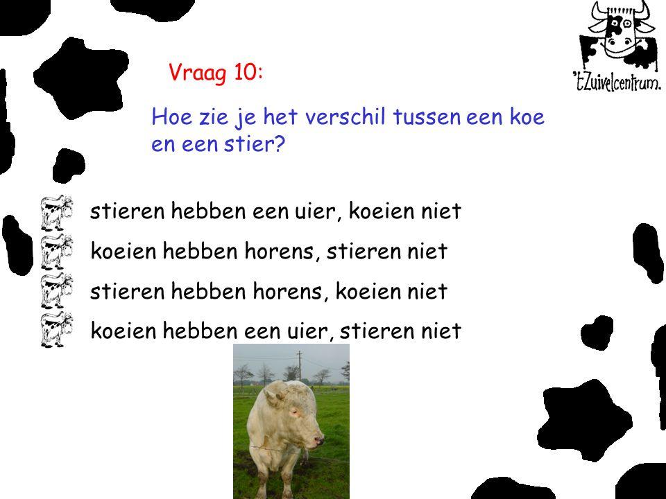 Vraag 10: Hoe zie je het verschil tussen een koe en een stier? stieren hebben een uier, koeien niet koeien hebben horens, stieren niet stieren hebben