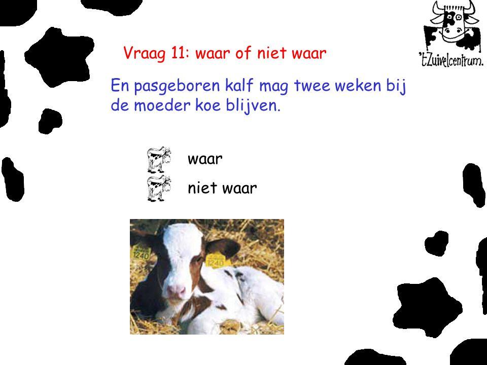 Vraag 11: waar of niet waar En pasgeboren kalf mag twee weken bij de moeder koe blijven. waar niet waar
