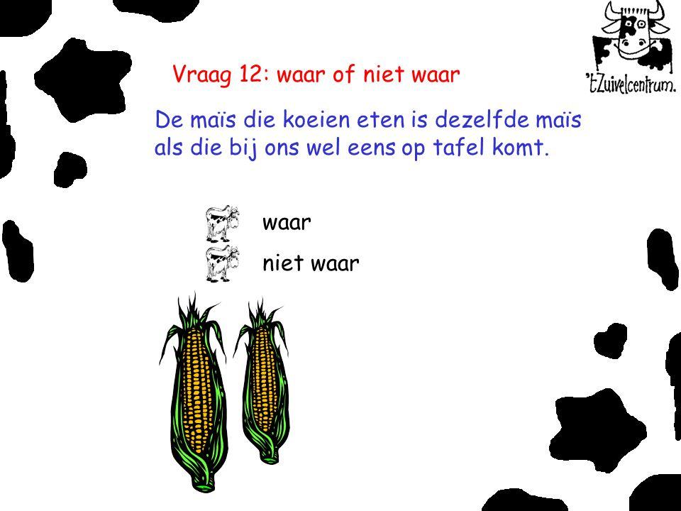 Vraag 12: waar of niet waar De maïs die koeien eten is dezelfde maïs als die bij ons wel eens op tafel komt. waar niet waar