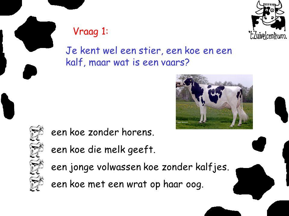 Vraag 1: Je kent wel een stier, een koe en een kalf, maar wat is een vaars? een koe zonder horens. een koe die melk geeft. een jonge volwassen koe zon