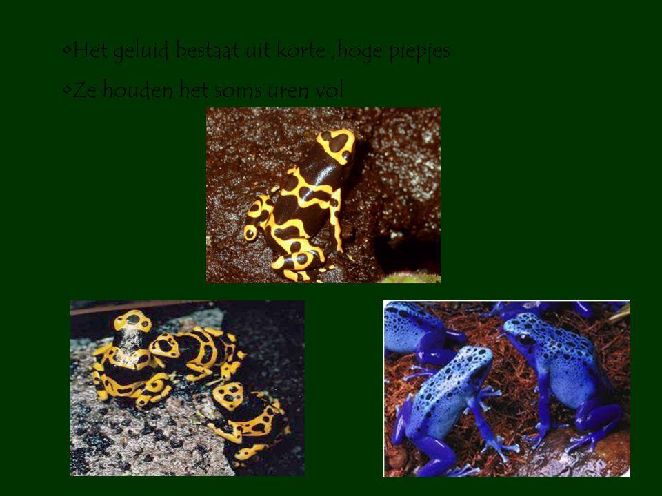 •Z•Ze worden niet groot •K•Kleinste soort onder de 1 cm •G•Grootste soort tussen 4 à 6 cm •V•Veel kleuren :geel,groen,rood,blauw,oranje •K•Kleine pootjes •B•Bij vluchten wel grote sprongen maken •M•Mannen kwaken hoorbaar tot wel 90 (dB)!!!!!!!