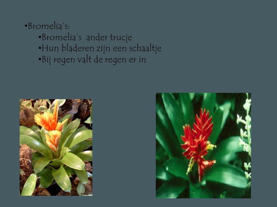 • De mooiste bloemen • Felle kleuren • Orchideeën : • Ze groeien op bomen • Eten uit boom • Geen wortels in grond • Maar luchtwortels • Halen vocht uit de lucht