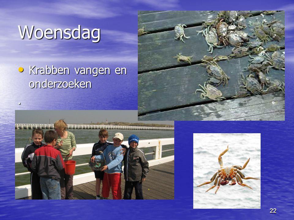 22 Woensdag • Krabben vangen en onderzoeken.