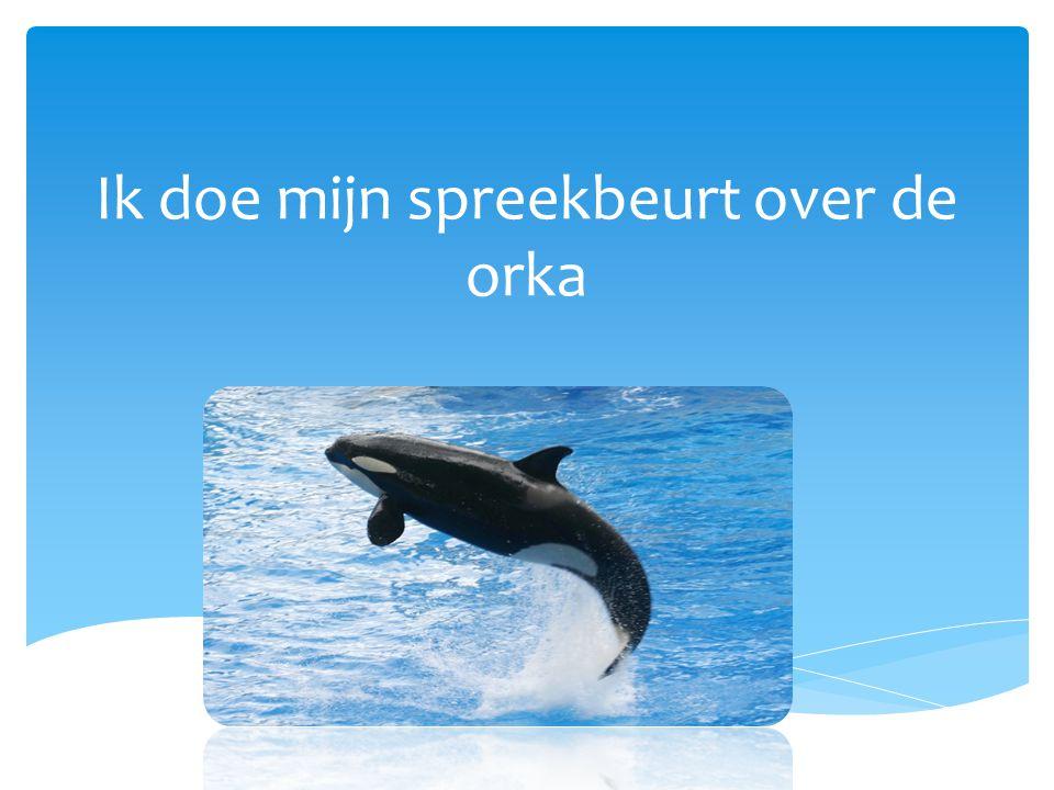 Ik doe mijn spreekbeurt over de orka