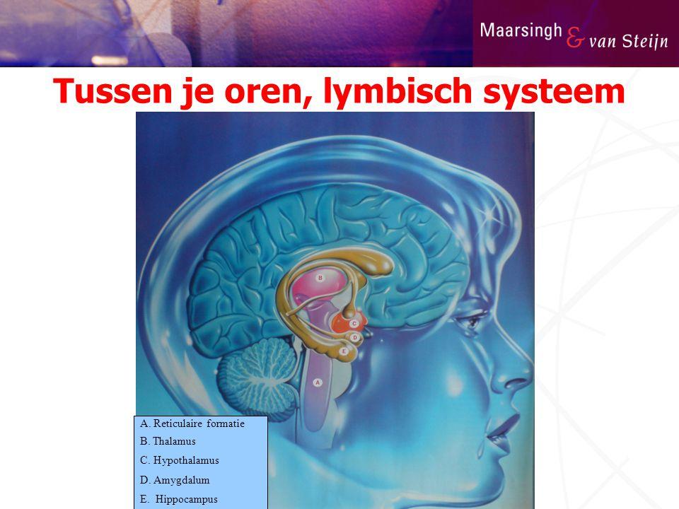 Tussen je oren, lymbisch systeem A. Reticulaire formatie B. Thalamus C. Hypothalamus D. Amygdalum E. Hippocampus