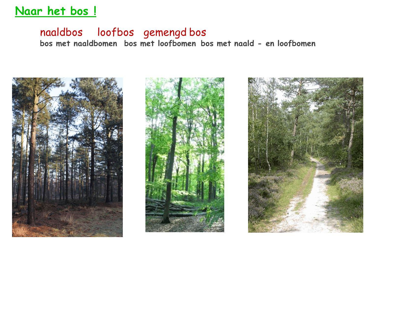 Naar het bos ! naaldbos loofbos gemengd bos bos met naaldbomen bos met loofbomen bos met naald - en loofbomen