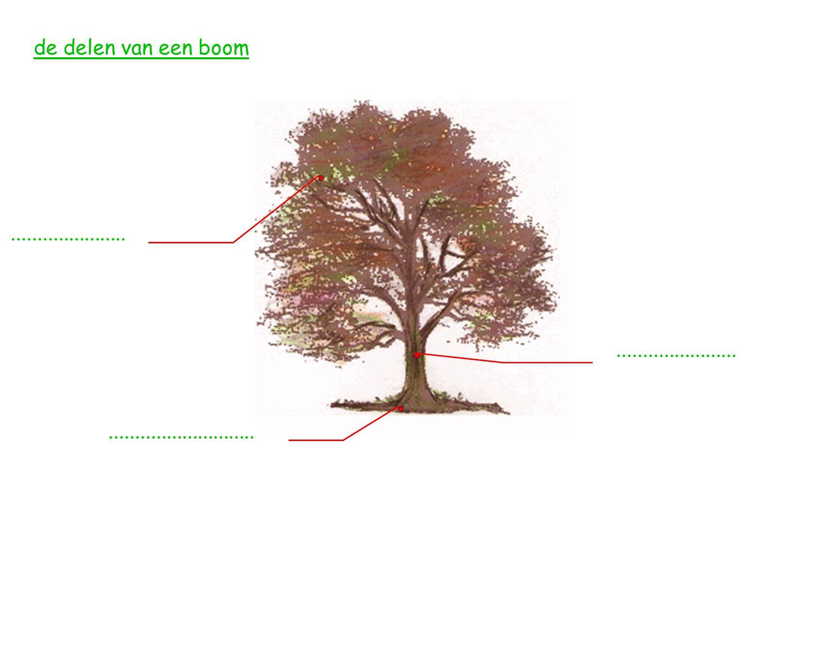 de delen van een boom.........................................................................