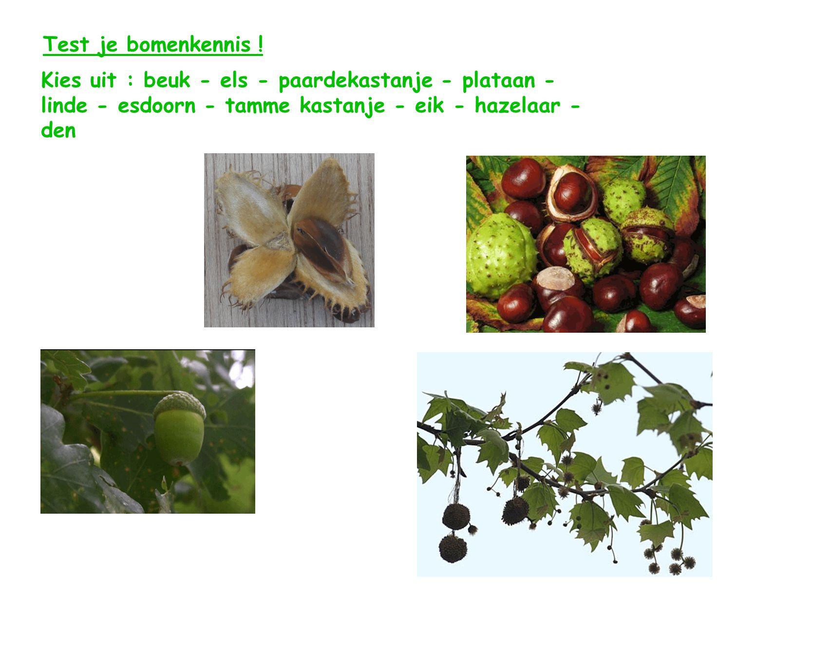 Test je bomenkennis ! Kies uit : beuk - els - paardekastanje - plataan - linde - esdoorn - tamme kastanje - eik - hazelaar - den