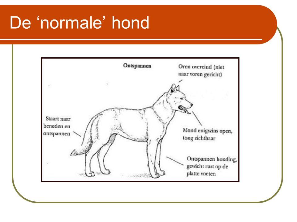De 'normale' hond