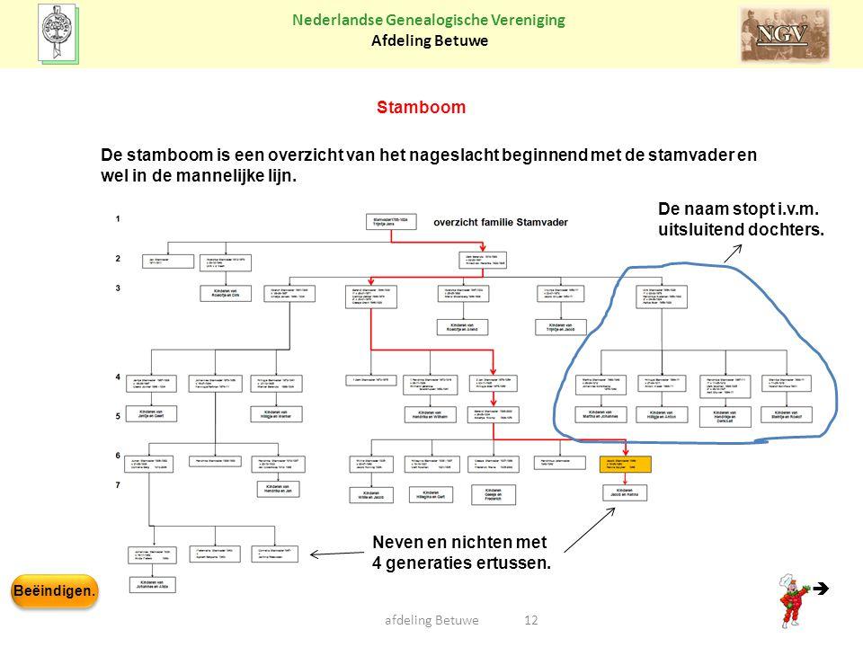 Beëindigen. Nederlandse Genealogische Vereniging Afdeling Betuwe afdeling Betuwe12 Stamboom De stamboom is een overzicht van het nageslacht beginnend