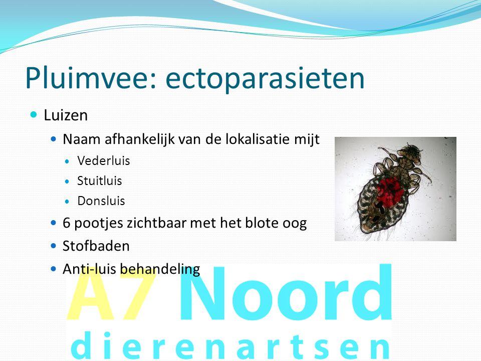 Pluimvee: ectoparasieten  Luizen  Naam afhankelijk van de lokalisatie mijt  Vederluis  Stuitluis  Donsluis  6 pootjes zichtbaar met het blote oo