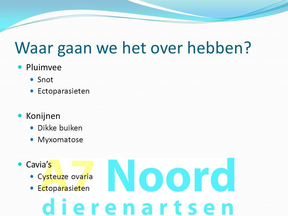 Konijnen: myxomatose  Symptomen:  Verdikte oogleden  Verdikte neusbrug  Verdikte oren  Diktes (myxomen) over lichaam  Gezwollen geslachtsdelen  Ziek!!