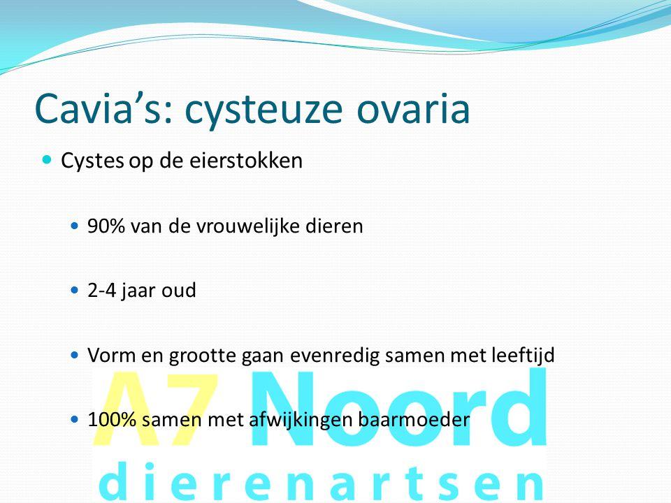Cavia's: cysteuze ovaria  Cystes op de eierstokken  90% van de vrouwelijke dieren  2-4 jaar oud  Vorm en grootte gaan evenredig samen met leeftijd