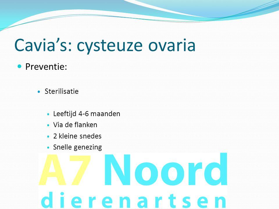 Cavia's: cysteuze ovaria  Preventie:  Sterilisatie  Leeftijd 4-6 maanden  Via de flanken  2 kleine snedes  Snelle genezing