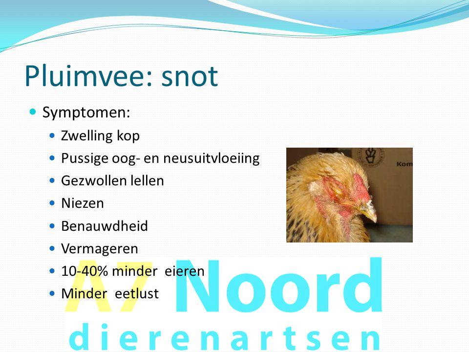 Pluimvee: snot  Symptomen:  Zwelling kop  Pussige oog- en neusuitvloeiing  Gezwollen lellen  Niezen  Benauwdheid  Vermageren  10-40% minder ei