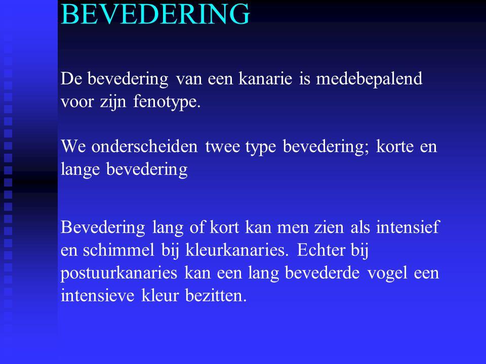 WAT IS BEVEDERING Bevedering heeft een aantal functies die zowel negatief als positief beïnvloed kunnen worden.