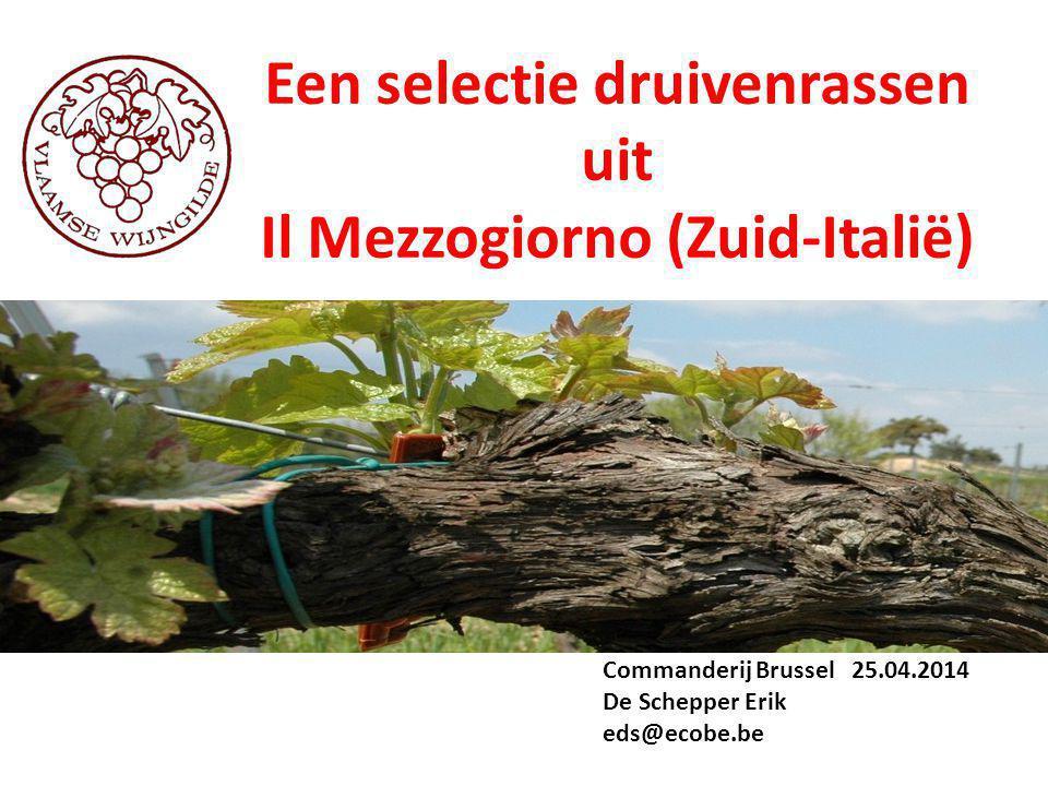 Een selectie druivenrassen uit Il Mezzogiorno (Zuid-Italië) Commanderij Brussel 25.04.2014 De Schepper Erik eds@ecobe.be