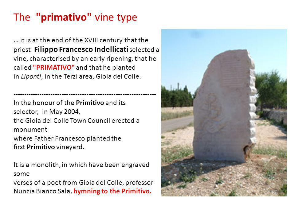 The primativo vine type … it is at the end of the XVIII century that the priest Filippo Francesco Indellicati selected a vine, characterised by an early ripening, that he called PRIMATIVO and that he planted in Liponti, in the Terzi area, Gioia del Colle.